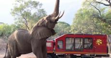 Окаванго, Зимбабве и Крюгер парк